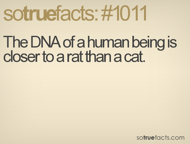 The DNA of a human being is closer to a rat than a cat.