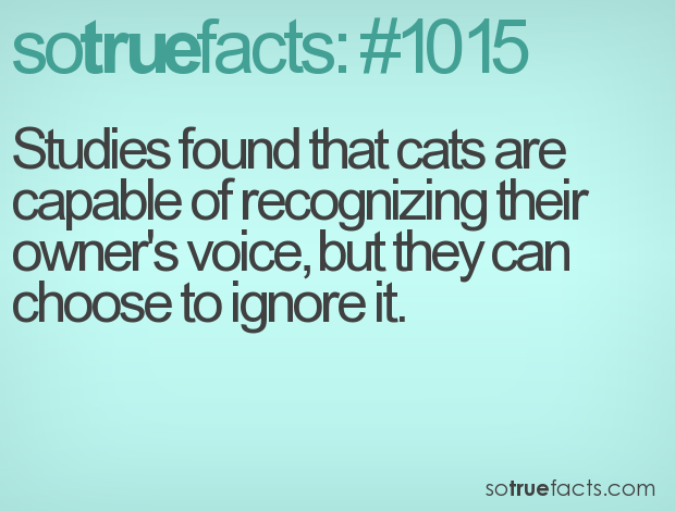 Studies found that cats are capable of recognizing their owner's voice, but they can choose to ignore it.