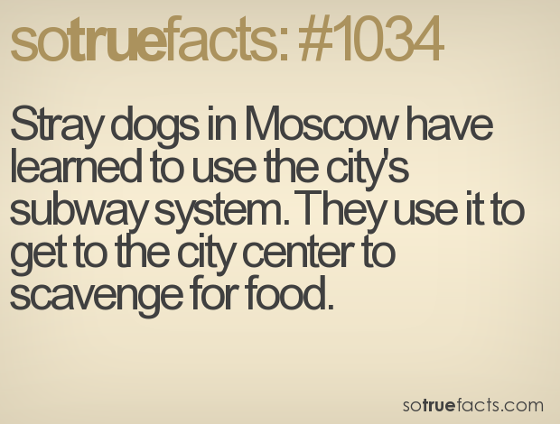 Stray dogs in Moscow have learned to use the city's subway system. They use it to get to the city center to scavenge for food.