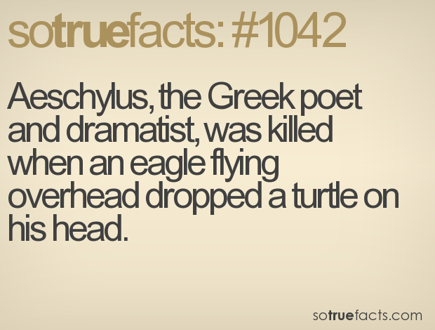 Aeschylus, the Greek poet and dramatist, was killed when an eagle flying overhead dropped a turtle on his head.