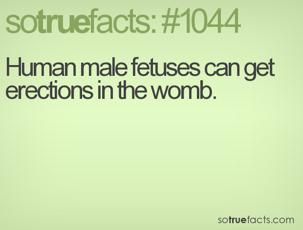 Human male fetuses can get erections in the womb.