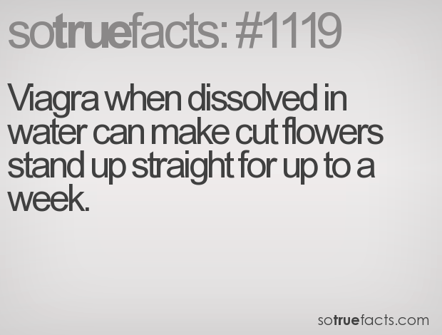 Viagra when dissolved in water can make cut flowers stand up straight for up to a week.