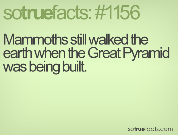 Mammoths still walked the earth when the Great Pyramid was being built.