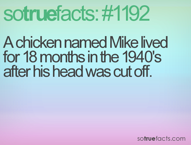 A chicken named Mike lived for 18 months in the 1940's after his head was cut off.