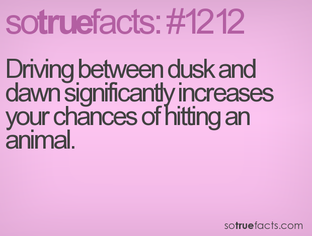 Driving between dusk and dawn significantly increases your chances of hitting an animal.