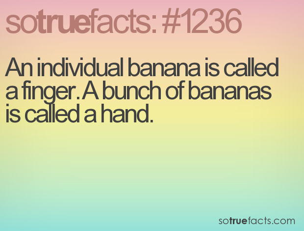 An individual banana is called a finger. A bunch of bananas is called a hand.