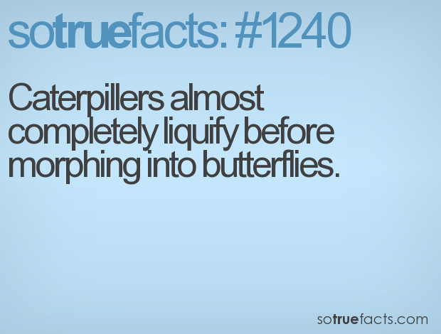 Caterpillers almost completely liquify before morphing into butterflies.