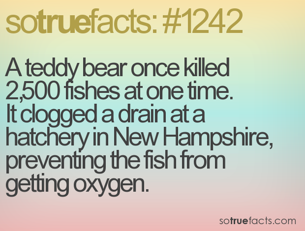 A teddy bear once killed 2,500 fishes at one time. It clogged a drain at a hatchery in New Hampshire, preventing the fish from getting oxygen.