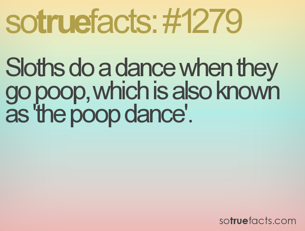 Sloths do a dance when they go poop, which is also known as 'the poop dance'.