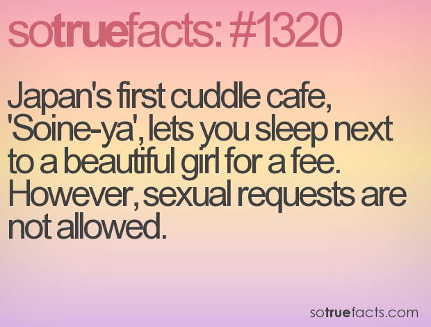 Japan's first cuddle cafe, 'Soine-ya', lets you sleep next to a beautiful girl for a fee. However, sexual requests are not allowed.