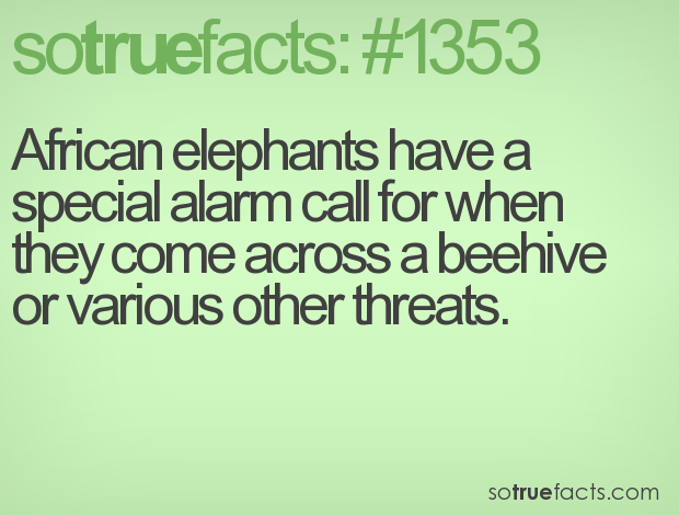 African elephants have a special alarm call for when they come across a beehive or various other threats.