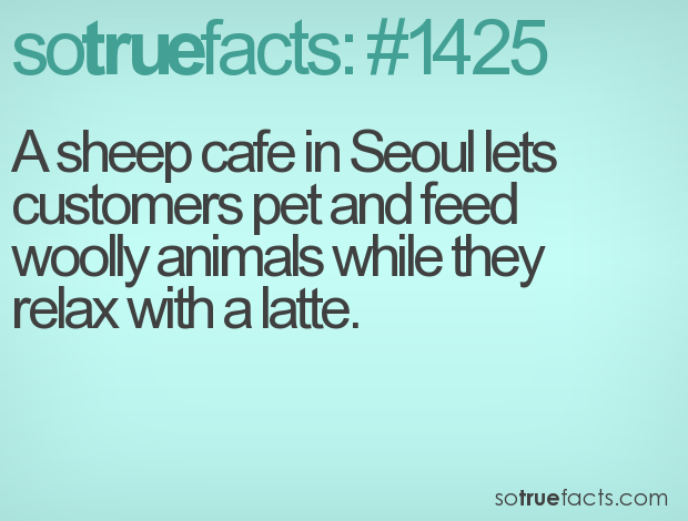 A sheep cafe in Seoul lets customers pet and feed woolly animals while they relax with a latte.