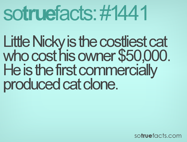 Little Nicky is the costliest cat who cost his owner $50,000. He is the first commercially produced cat clone.