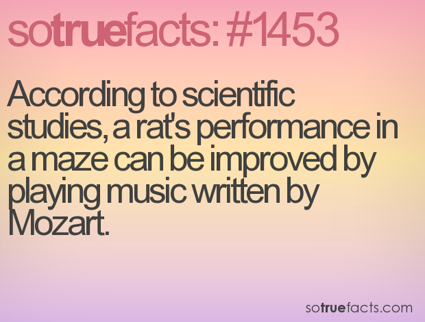 According to scientific studies, a rat's performance in a maze can be improved by playing music written by Mozart.