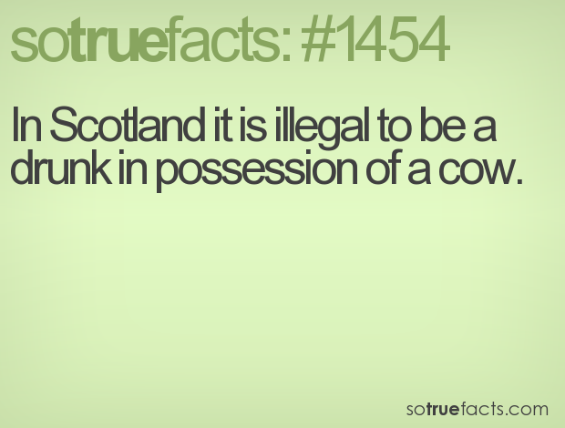In Scotland it is illegal to be a drunk in possession of a cow.