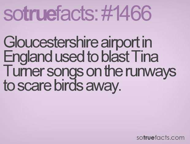 Gloucestershire airport in England used to blast Tina Turner songs on the runways to scare birds away.