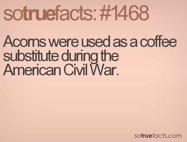 Acorns were used as a coffee substitute during the American Civil War.