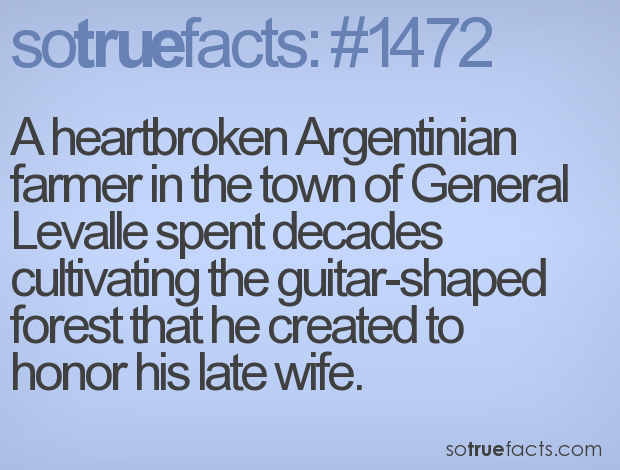 A heartbroken Argentinian farmer in the town of General Levalle spent decades cultivating the guitar-shaped forest that he created to honor his late wife.