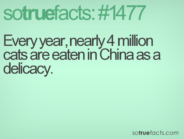 Every year, nearly 4 million cats are eaten in China as a delicacy.