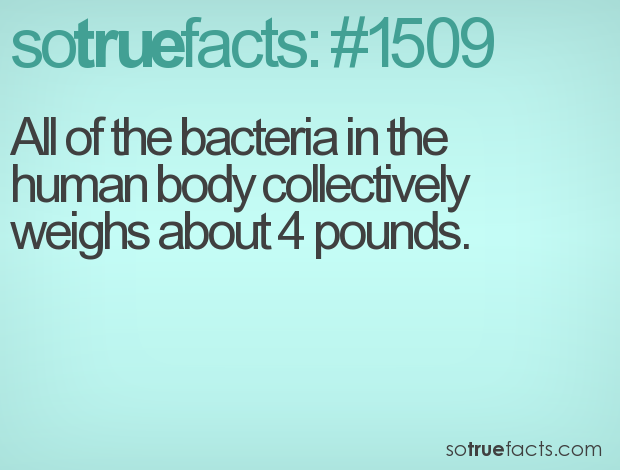 All of the bacteria in the human body collectively weighs about 4 pounds.