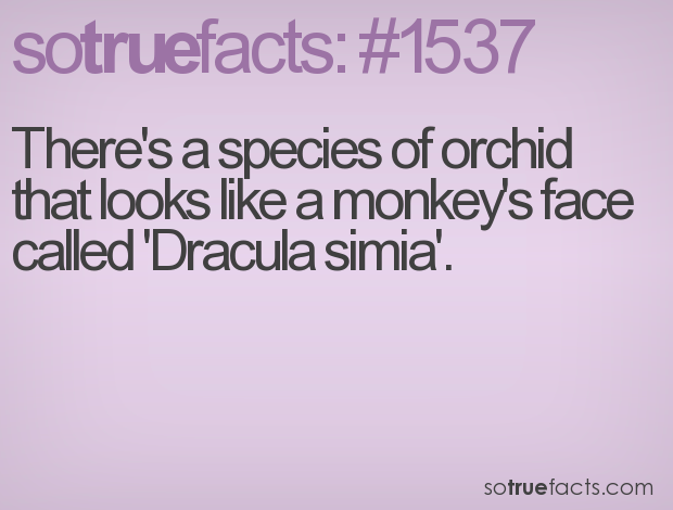 There's a species of orchid that looks like a monkey's face called 'Dracula simia'.
