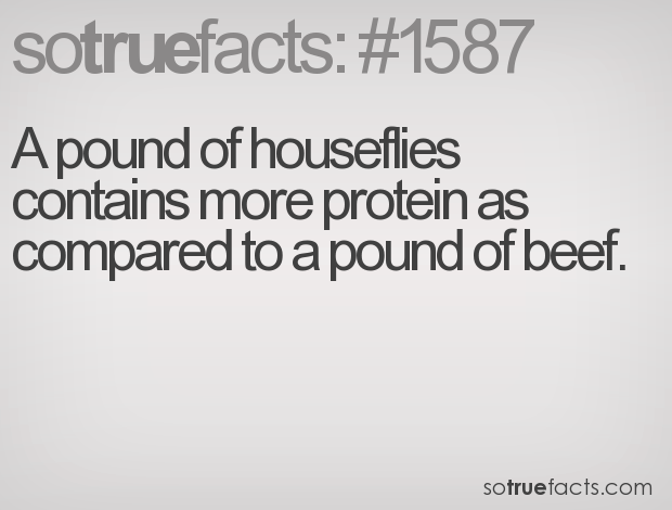 A pound of houseflies contains more protein as compared to a pound of beef.