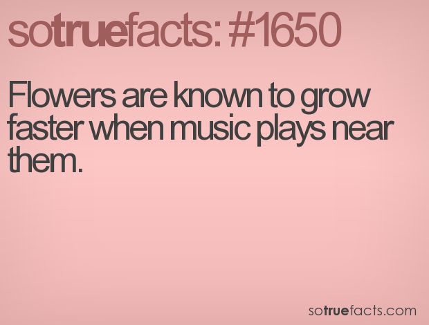 Flowers are known to grow faster when music plays near them.