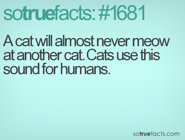 A cat will almost never meow at another cat. Cats use this sound for humans.