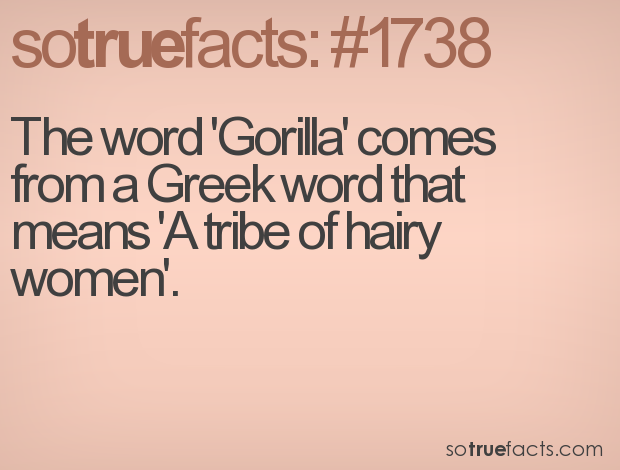 The word 'Gorilla' comes from a Greek word that means 'A tribe of hairy women'.