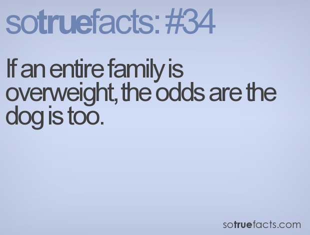 If an entire family is overweight, the odds are the dog is too.