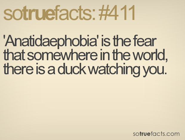 'Anatidaephobia' is the fear that somewhere in the world, there is a duck watching you.