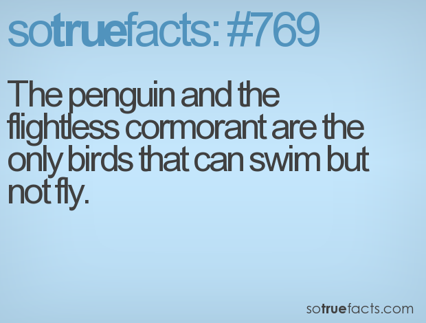 The penguin and the flightless cormorant are the only birds that can swim but not fly.