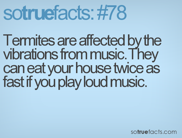 Termites are affected by the vibrations from music. They can eat your house twice as fast if you play loud music.