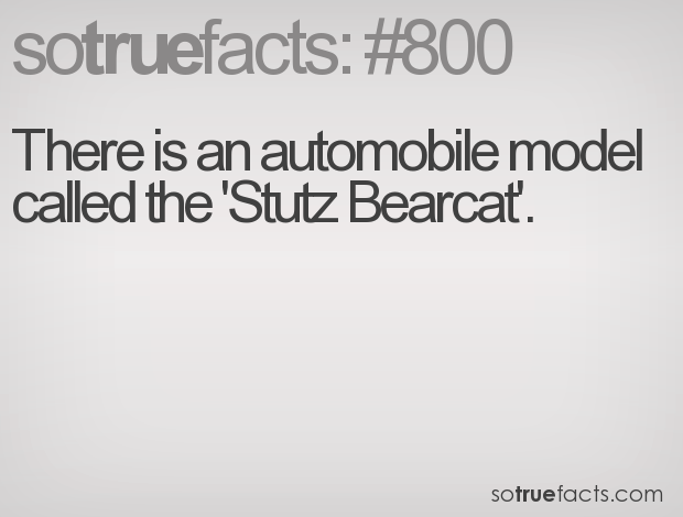 There is an automobile model called the 'Stutz Bearcat'.
