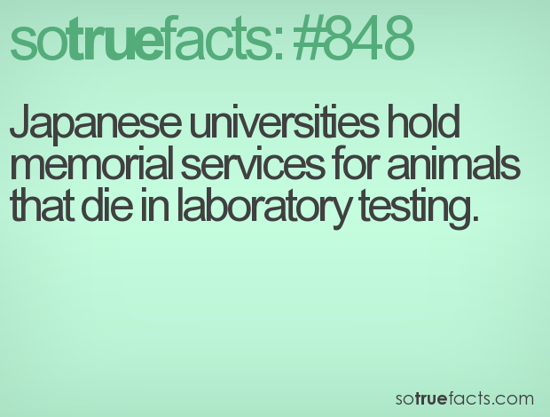 Japanese universities hold memorial services for animals that die in laboratory testing.
