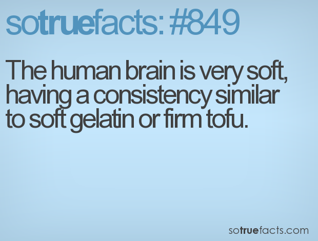 The human brain is very soft, having a consistency similar to soft gelatin or firm tofu.