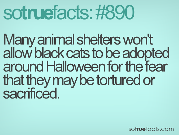 Many animal shelters won't allow black cats to be adopted around Halloween for the fear that they may be tortured or sacrificed.