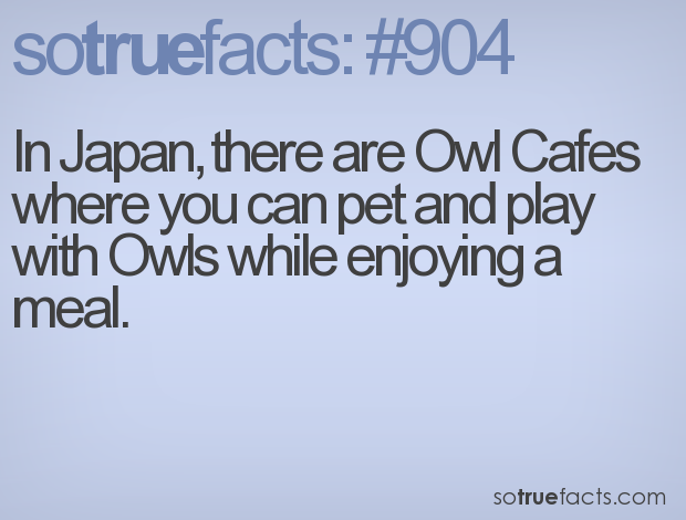 In Japan, there are Owl Cafes where you can pet and play with Owls while enjoying a meal.