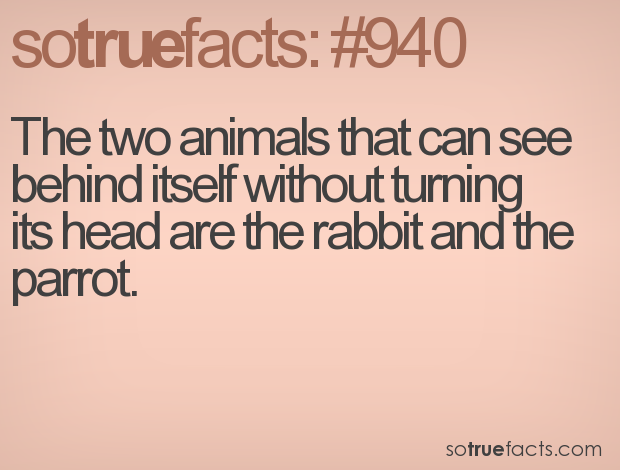 The two animals that can see behind itself without turning its head are the rabbit and the parrot.
