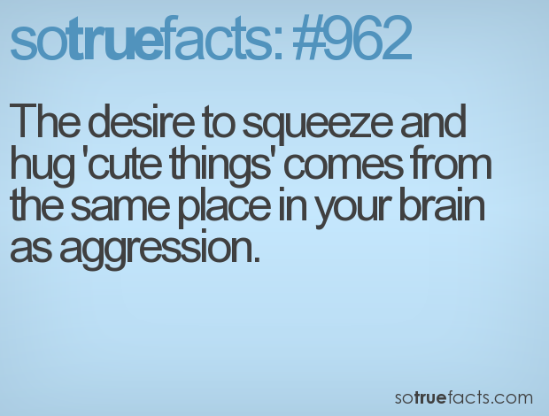 The desire to squeeze and hug 'cute things' comes from the same place in your brain as aggression.