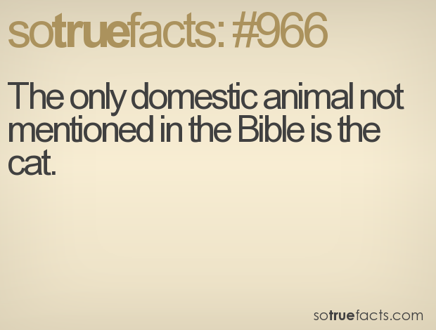 The only domestic animal not mentioned in the Bible is the cat.
